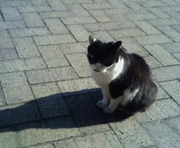 愛宕山の猫。