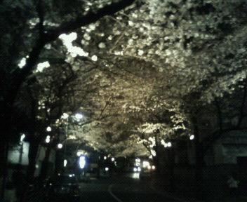 スペイン坂の桜