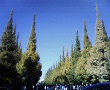 外苑前のイチョウ並木