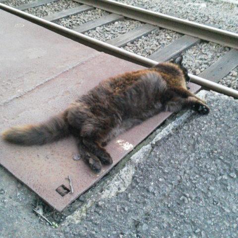 駅猫おさむ
